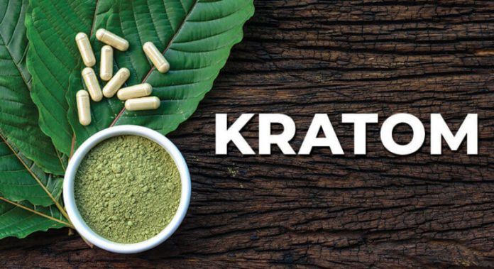 4 Key Herb Kratom Facts You Must Understand - Gizmo Story