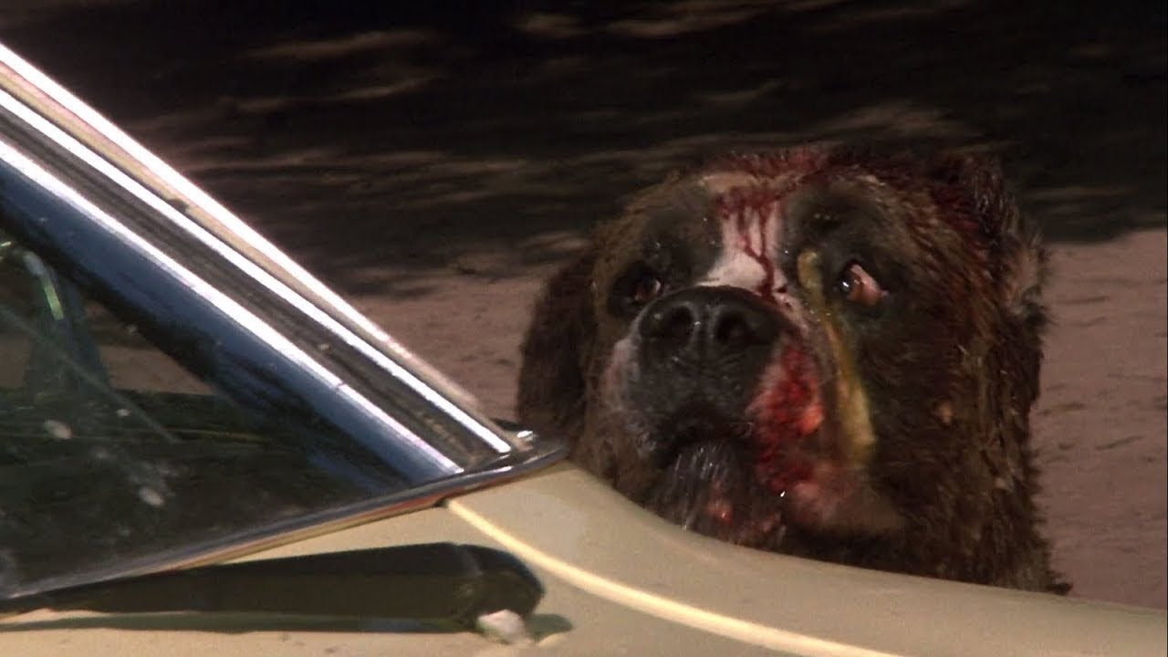 CUJO (1983) Movie Scene