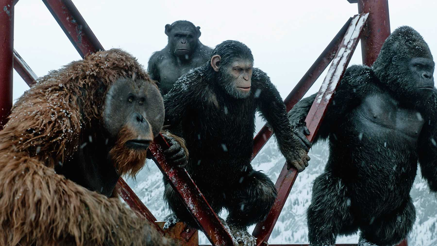 War for the Planet of the Apes Movie Scene